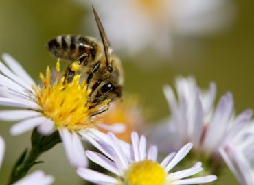 Le api e la loro importanza