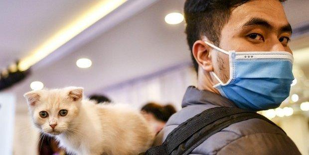 Coronavirus: anche gli animali da compagnia possono essere contagiati.