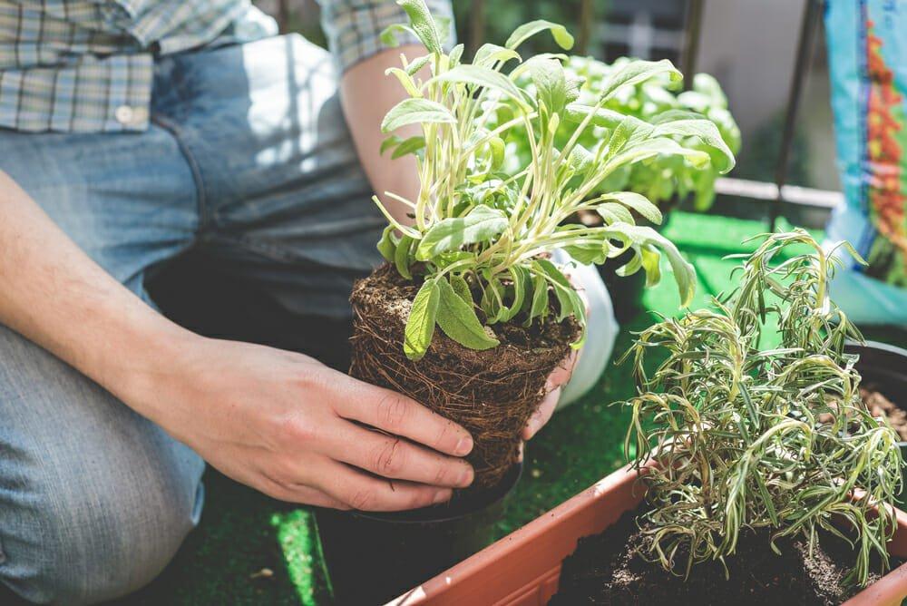 creare un orto in balcone