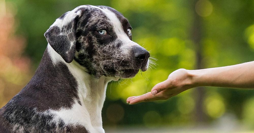 cani odiano persone