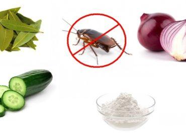 Eliminare gli scarafaggi da casa in modo semplice e con rimedi naturali.