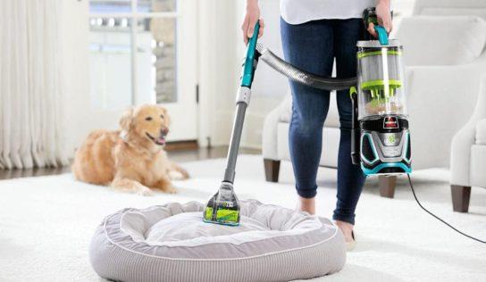 Come pulire la casa quando si hanno degli animali domestici.