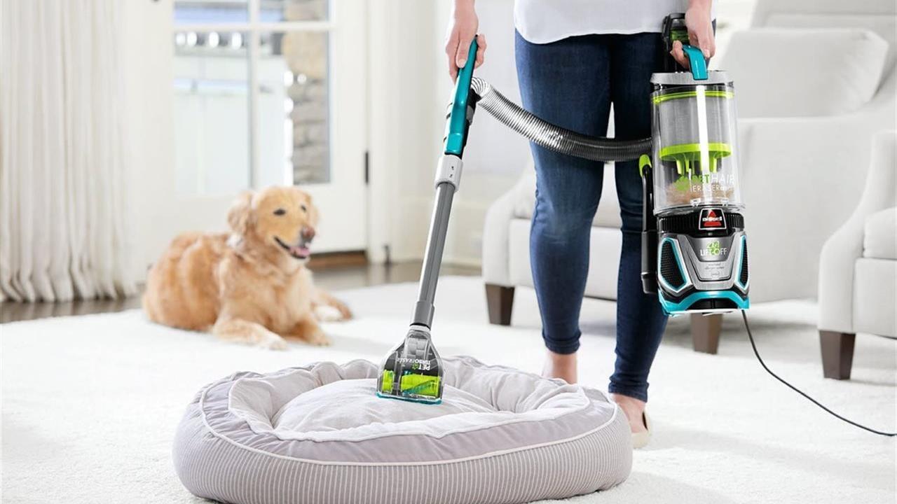 pulire la casa quando hai animali domestici