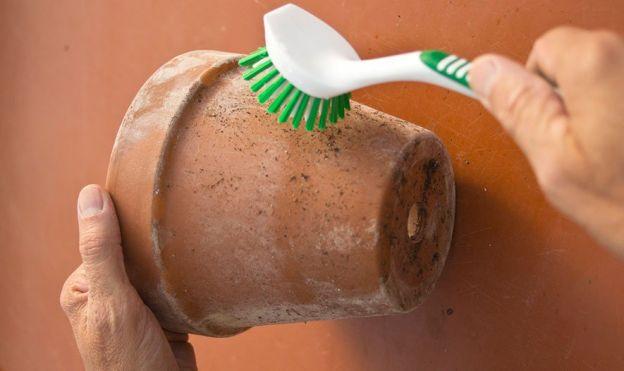 Come lavare i vasi in terracotta