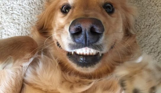 Come prevenire o togliere il tartaro dai denti del cane