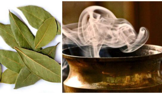 I benefici che si possono ottenere bruciando le foglie di alloro essiccate.