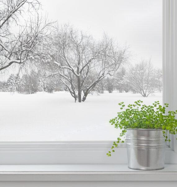 Come proteggere le piante del balcone, terrazzo o giardino dal freddo