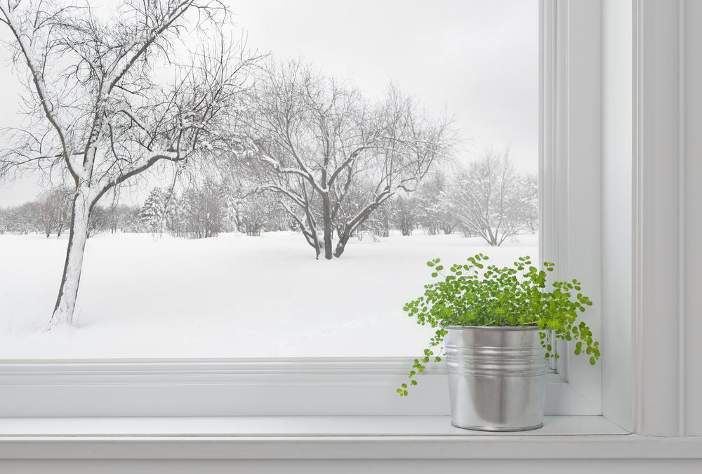 piante dal freddo
