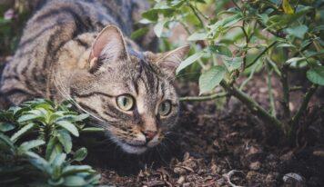 Come tenere lontano i gatti dal proprio giardino.