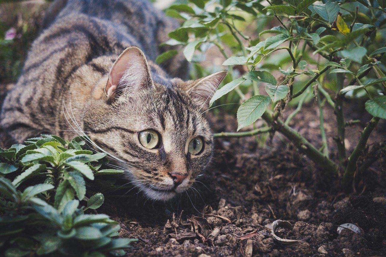 come tenere lontano i gatti dal giardino
