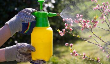 Insetticidi naturali fai da te efficaci contro parassiti e insetti