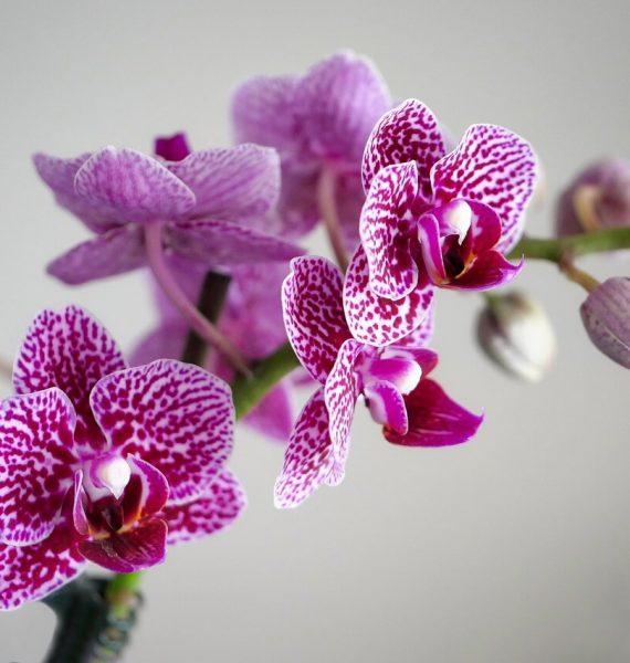 Come prendersi cura delle orchidee in nostra assenza e quindi anche durante le nostre vacanze.