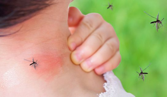 Come allontanare le zanzare con i fondi del caffè