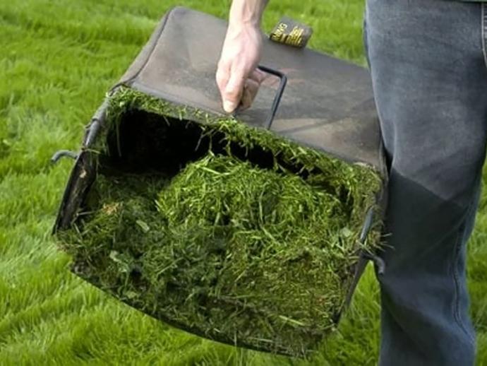 utilizzare erba tagliata